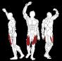 BH FITNESS L010 LEG EXTENSION svalové partie