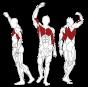 BH FITNESS L110 Lat Pully procvičované svaly