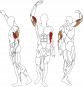 BH FITNESS L140 BICEPS / TRICEPS svalové partie