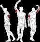 BH FITNESS L160 HORIZONTAL TRICEPS procvičované partie