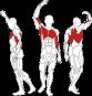 L550 svalové partie
